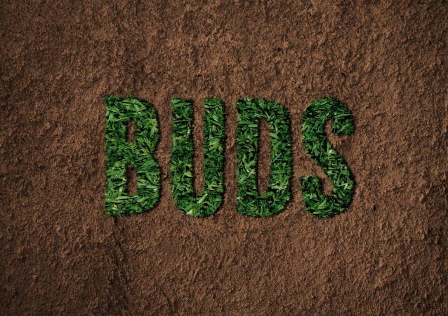 buds_grass_cover